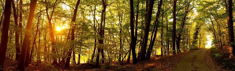 Sendero por bosque